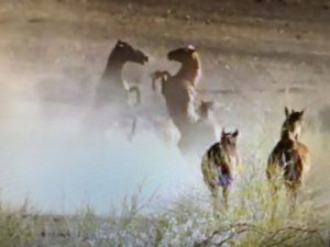 Whispering Wild horses